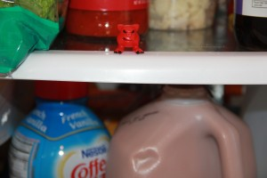 Red Mordle chilling in the fridge!