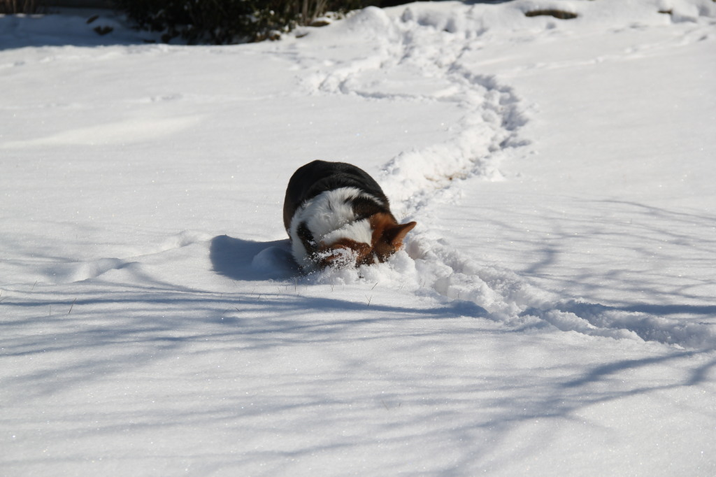 Nothing's as awesome as rubbing your head through tunnels of freshly-fallen snow.