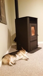 Yoda sleeping near stove