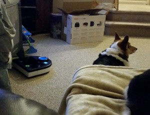 """Leia barked diligently at the robot vacuum, pausing for just a moment to give my husband the Death Stare, as if to ask, """"How could you bring THIS into our house?"""" Funny that she knew who was responsible."""