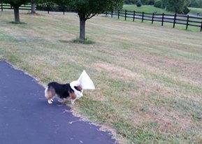 leia cone of shame