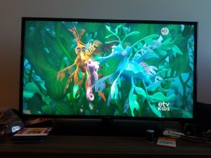 I had to snap a shot of the screen while my daughter learned about leafy seadragons.